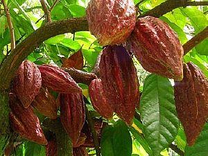 Масло какао, его свойства и способы применения!   Ярмарка Мастеров - ручная работа, handmade