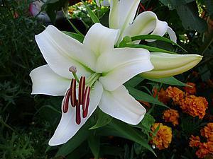 Мои цветы | Ярмарка Мастеров - ручная работа, handmade