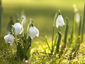 А у нас в душе весна! Скидки по-весеннему)   Ярмарка Мастеров - ручная работа, handmade