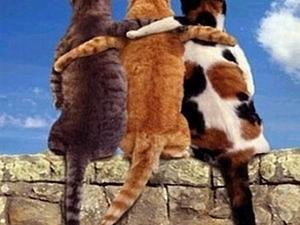 Друг может быть один, дружбы - должно быть много!   Ярмарка Мастеров - ручная работа, handmade