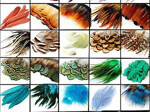 90+ видов перьев в Наличии!   Ярмарка Мастеров - ручная работа, handmade