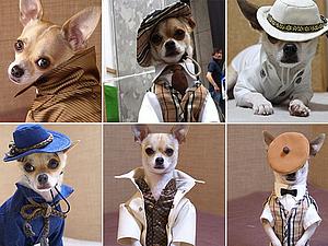 «Главное, чтобы костюмчик сидел!», или Сногсшибательные наряды для собачек. Ярмарка Мастеров - ручная работа, handmade.