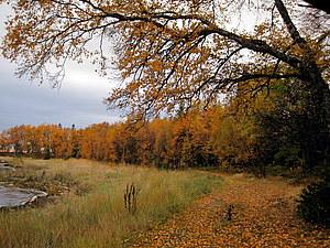 Осень цвета охра, часть 2   Ярмарка Мастеров - ручная работа, handmade