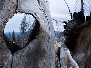Вдохновение.Сказочный лес.   Ярмарка Мастеров - ручная работа, handmade