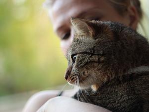Благотворительный аукцион в помощь бездомным котейкам | Ярмарка Мастеров - ручная работа, handmade