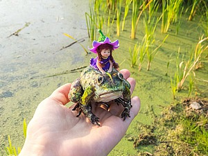 А вот и волшебная лягушка :) | Ярмарка Мастеров - ручная работа, handmade