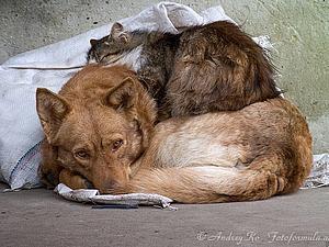Акция в помощь бездомным животным в магазине Ольги