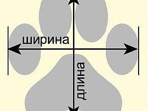 как измерить лапку собачке | Ярмарка Мастеров - ручная работа, handmade