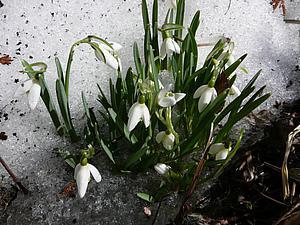 ...Пусть юная весна в сердца войдёт... | Ярмарка Мастеров - ручная работа, handmade