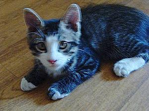 Отдала!!! (Отдам котенка в добрые руки!) | Ярмарка Мастеров - ручная работа, handmade