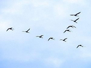 Мы все те самые птички...или давайте будем непохожими! | Ярмарка Мастеров - ручная работа, handmade
