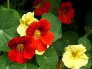 Скромный садовый цветок как источник вдохновения | Ярмарка Мастеров - ручная работа, handmade