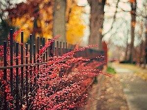 Теплый октябрьский флэшмоб холодным осенним вечером) | Ярмарка Мастеров - ручная работа, handmade