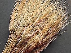 Пшеница | Ярмарка Мастеров - ручная работа, handmade