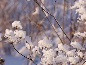 Анонс! Скоро! Новогодний конкурс коллекций! Приз - зимние бусы с вышивкой. | Ярмарка Мастеров - ручная работа, handmade