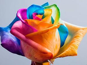 Розы цвета радуги   Ярмарка Мастеров - ручная работа, handmade