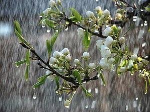 О дожде | Ярмарка Мастеров - ручная работа, handmade