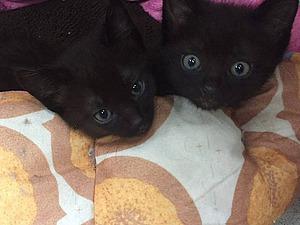 Славные братишки-котишки ищут новый дом!   Ярмарка Мастеров - ручная работа, handmade