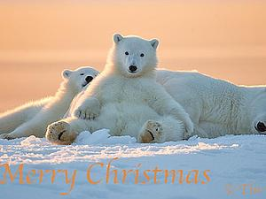 Merry Christmas! | Ярмарка Мастеров - ручная работа, handmade
