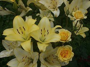 Макушка лета. Золотой сад! | Ярмарка Мастеров - ручная работа, handmade