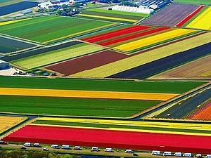 Голландия — страна цветов и цветоводов | Ярмарка Мастеров - ручная работа, handmade
