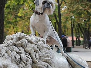 Боня и выставка собак | Ярмарка Мастеров - ручная работа, handmade