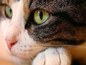 Кошки, которые нас вдохновляют... | Ярмарка Мастеров - ручная работа, handmade