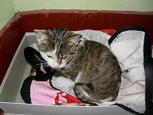 SOS!!! Юный котик ищет дом! | Ярмарка Мастеров - ручная работа, handmade
