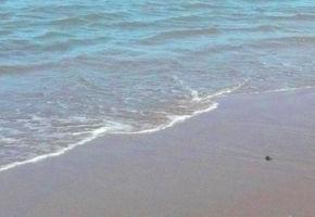 Обручальные кольца с берега Средиземного моря.   Ярмарка Мастеров - ручная работа, handmade