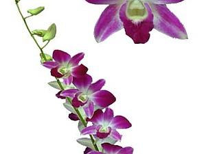МК по лепке орхидеи Дендробиум.   Ярмарка Мастеров - ручная работа, handmade