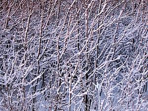 Зима по-воронежски! Часть 1. | Ярмарка Мастеров - ручная работа, handmade