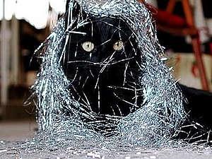 Совсем не праздничное, но актуальное для кошковладельцев. | Ярмарка Мастеров - ручная работа, handmade