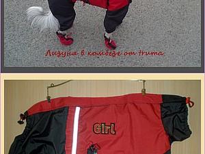 Одежда для собак,заказы на осень.. Ярмарка Мастеров - ручная работа, handmade.