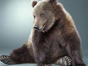 Медведи Jill Greenberg | Ярмарка Мастеров - ручная работа, handmade