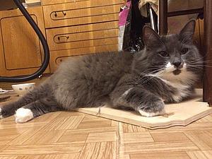 Как у кота Бетона появился сосед | Ярмарка Мастеров - ручная работа, handmade