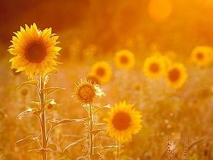Солнышко вокруг нас даже в пасмурные дни | Ярмарка Мастеров - ручная работа, handmade