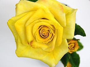 Роза из полимерной глины. МК. | Ярмарка Мастеров - ручная работа, handmade