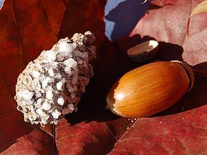 «Выращиваем кристаллы» на природном осеннем материале. Ярмарка Мастеров - ручная работа, handmade.