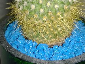 Изготовление кактусария. Ярмарка Мастеров - ручная работа, handmade.