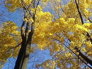 Осенние зарисовки. Бабье лето | Ярмарка Мастеров - ручная работа, handmade
