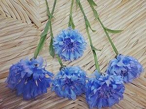 Базовый Курс  по лепке цветов. | Ярмарка Мастеров - ручная работа, handmade