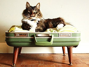 Лежанка для кошки своими руками | Ярмарка Мастеров - ручная работа, handmade