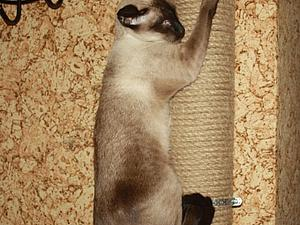 Большая когтеточка своими руками | Ярмарка Мастеров - ручная работа, handmade