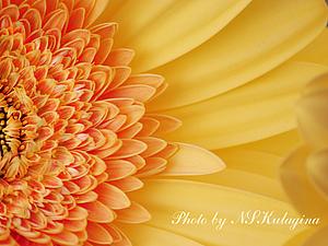 Вдохновение цветом - оранжевый. | Ярмарка Мастеров - ручная работа, handmade
