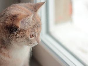 Кошка Шура и снег | Ярмарка Мастеров - ручная работа, handmade