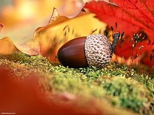 Рыжая бестия! | Ярмарка Мастеров - ручная работа, handmade