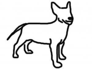 Как правильно снять мерки с собаки | Ярмарка Мастеров - ручная работа, handmade