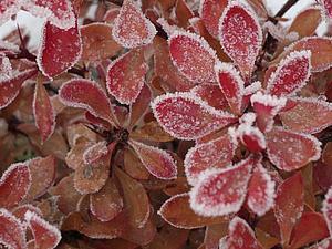 Зимняя красота | Ярмарка Мастеров - ручная работа, handmade