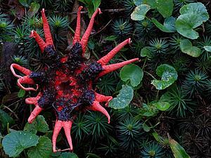 Гриб-осьминог | Ярмарка Мастеров - ручная работа, handmade