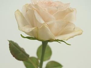Осталось 1 место на  Мк по лепке розы | Ярмарка Мастеров - ручная работа, handmade
